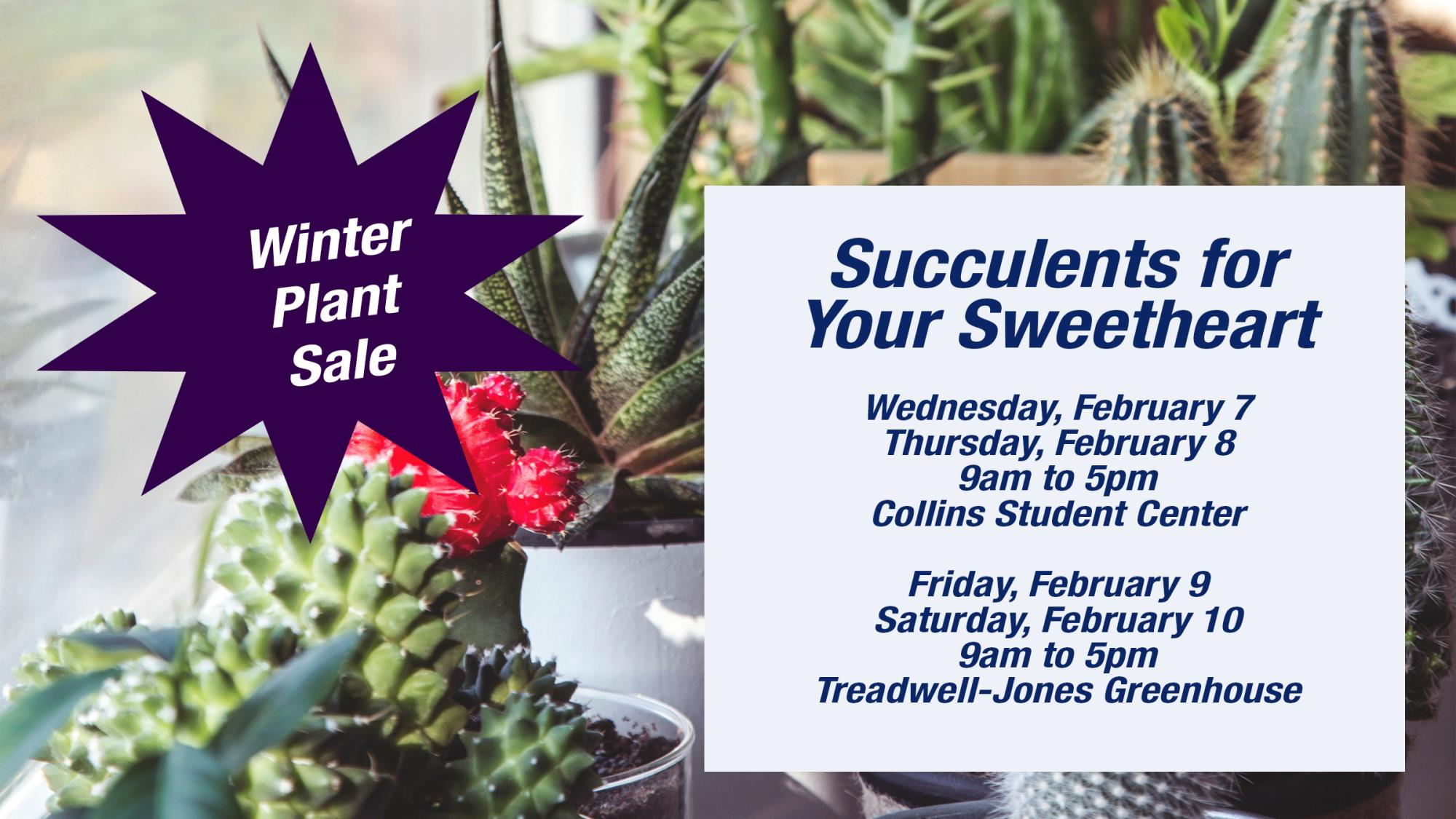 Plant Sale, Plants, VHCC, Horticulture, Greenhouse